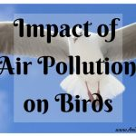 Impact of Air Pollution on Birds: How the Soul Returns to its Ancestors