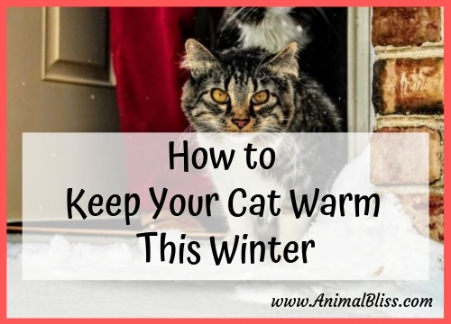 How to Keep Your Cat Warm This Winter