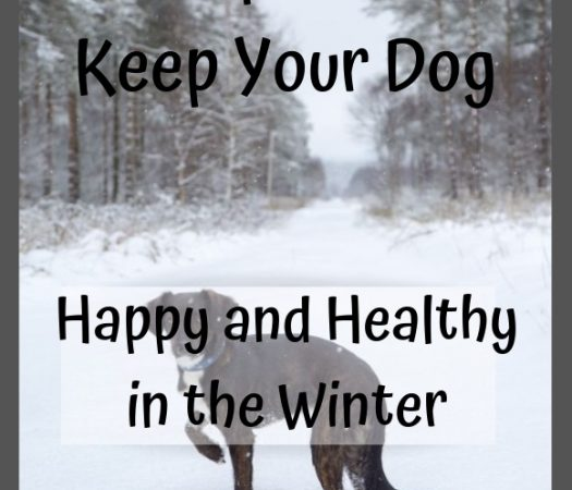 Tips to Keep Your Dog Happy and Healthy in the Winter