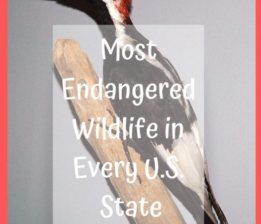 Most Endangered Wildlife in Every U.S. State