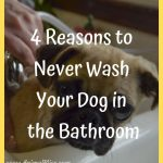 4 Reasons to Never Wash Your Dog in the Bathroom
