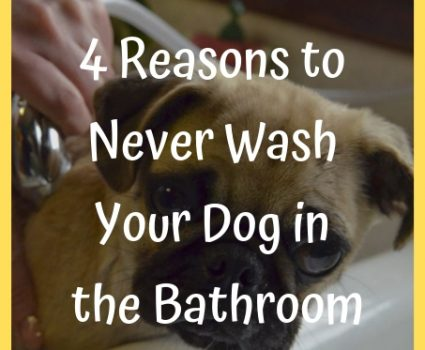 Never Wash Your Dog in the Bathroom
