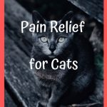 Natural Pain Relief for Cats: Top 5 Foods and Supplements