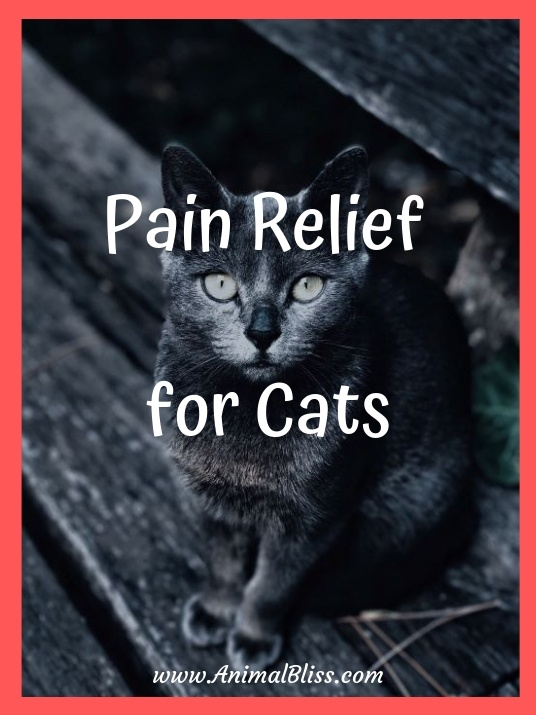 Natural Pain Relief for Cats: Top 5 Food and Supplements