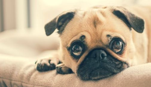Turn Your Home into a Pet Friendly Zone