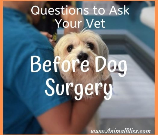 Questions to Ask Your Vet Before Dog Surgery