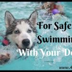 4 Tips For Safely Swimming With Your Dog