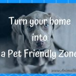 Turn Your Home into a Pet-Friendly Zone