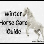 Winter Horse Care Guide Infographic