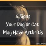 4 Signs Your Dog or Cat May Have Arthritis