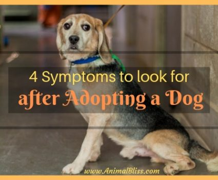 4 Symptoms to Look for after adopting a dog