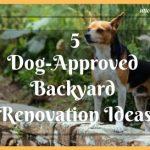 5 Dog-Approved Backyard Renovation Ideas