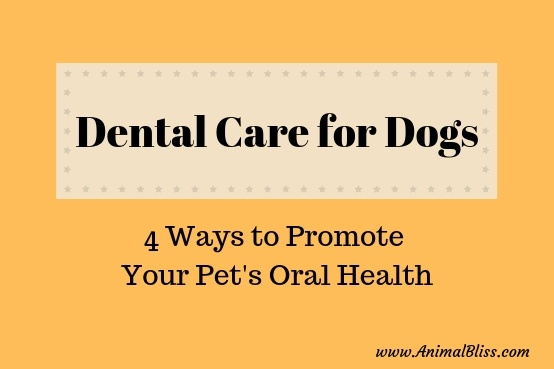 Dental Care for Your Dog: 4 Ways to Promote Your Pet's Oral Health