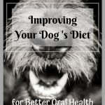 Dog Diet for Better Oral Health and Dental Care