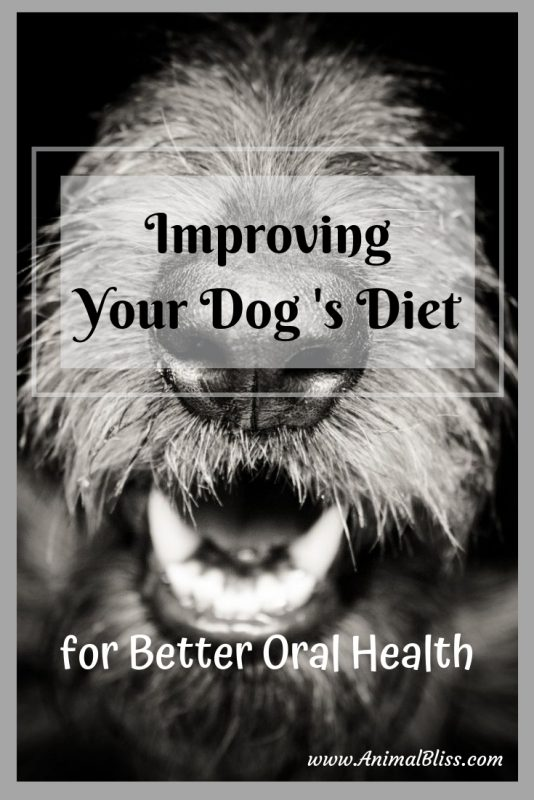 Improving Dog Diet for Better Oral Health