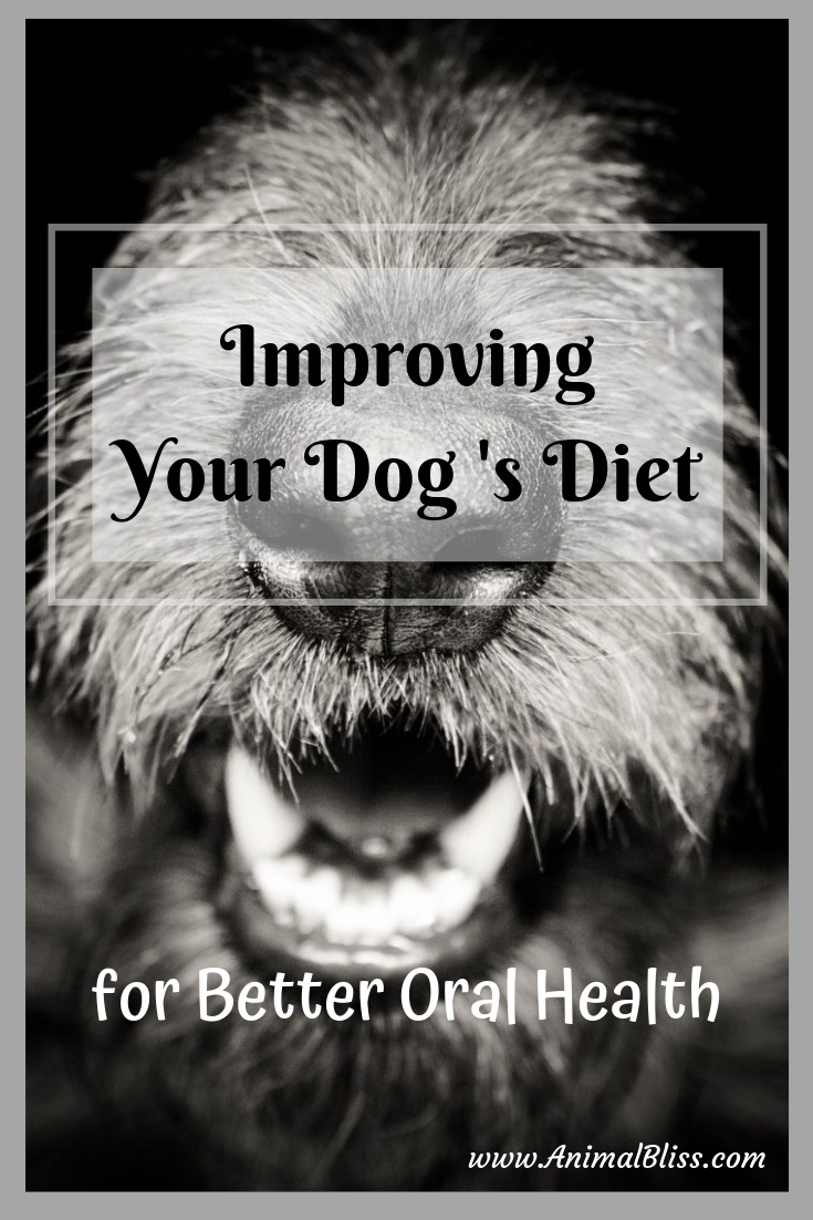 Improving Dog Diet for Better Oral Health and Dental Care