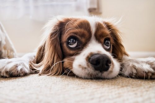 Copper: Safest Natural Remedy for 4 Common Pet Problems