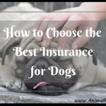 How to Choose the Best Insurance for Dogs