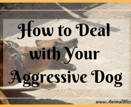 How to Deal with Your Aggressive Dog