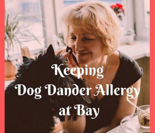 Keeping Dog Dander Allergy at Bay