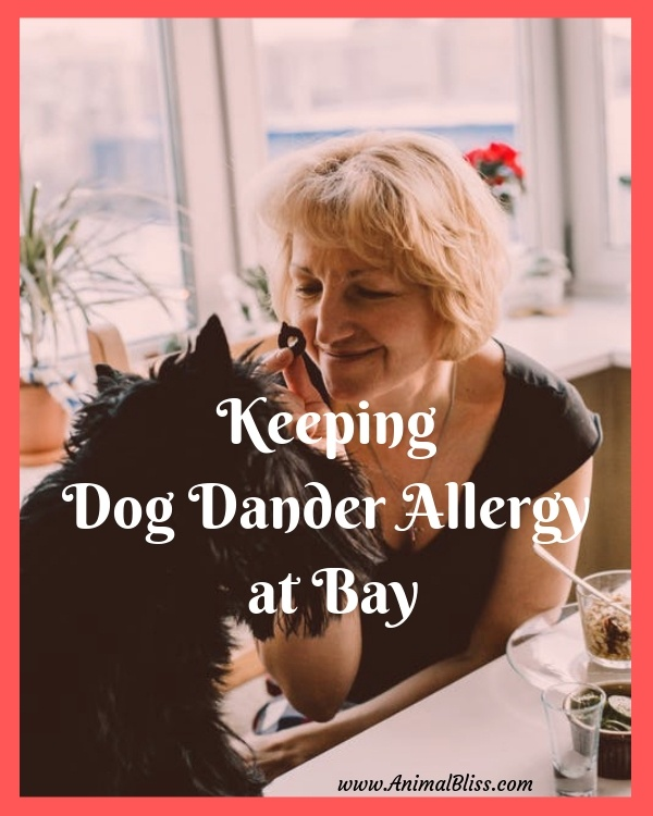 Best Ways to Keep Dog Dander Allergy at Bay