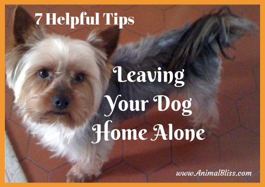 7 Helpful Tips for Leaving Your Pet Home Alone