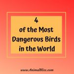 4 of the Most Dangerous Birds in the World