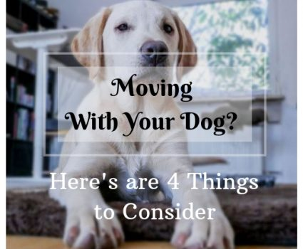 Moving With Your Dog? Here's What Makes a Pet-Friendly Home