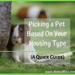 Picking a Pet Based On Your Housing Type