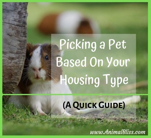 Quick Guide to Picking a Pet Based On Your Housing Type