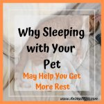 Why Sleeping with Your Pet May Help You Get More Rest
