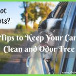 Got Pets? Tips to Keep Your Car Clean and Odor Free