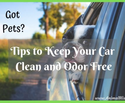Got Pets: Tips to Keep Your Car Clean and Odor Free