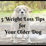 5 Weight Loss Tips for Your Older Dog, Canine Obesity