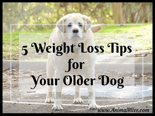 5 Weight Loss Tips for Your Older Dog