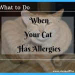 What to Do When Your Cat Has Allergies