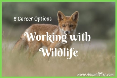 5 Career Options for Working with Wildlife