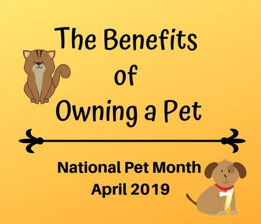 The Benefits of Owning a Pet - National Pet Day, April 2019