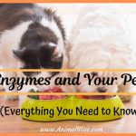 Enzymes and Your Pet: Everything You Need to Know