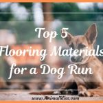 Top 5 Flooring Materials for a Dog Run