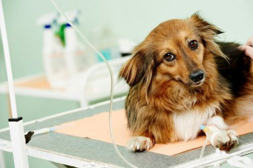 Is Your Dog Diabetic? Signs, Symptoms, and Treatment