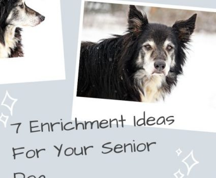 7 Enrichment Ideas For Your Senior Dog