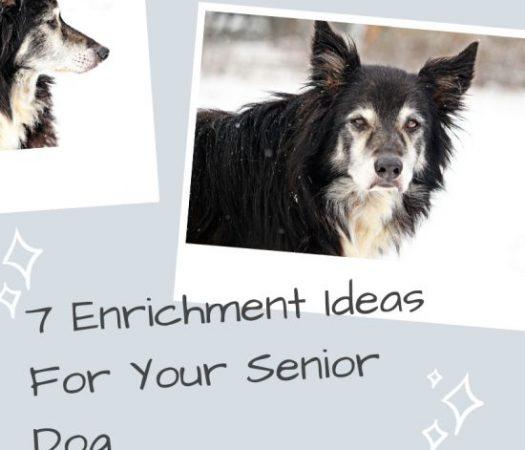 7 Enrichment Ideas For Your Senior Dog