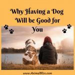Having a Dog Will Be Good for You – You'll See!