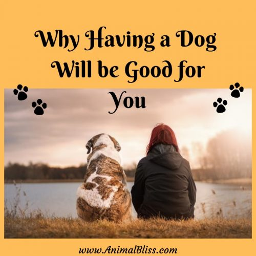 Why Having a Dog will be Good for You