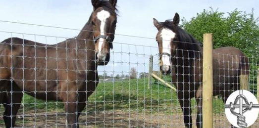 Horse Fencing Options and What To Consider When Buying