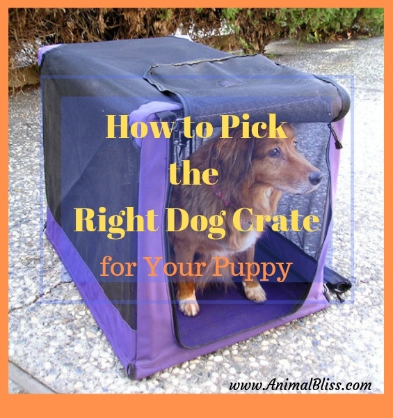 How to Pick the Right Dog Crate for Your Puppy