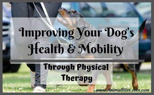 Improving Your Dog's Health and Mobility Through Physical Therapy