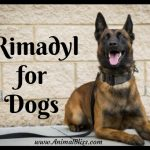 Rimadyl for Dogs: Uses, Dosage, Side Effects, Alternatives