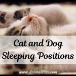Meaning of Cat and Dog Sleeping Positions